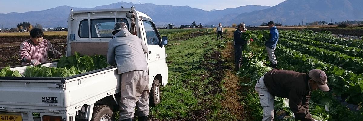 農耕班 日中の活動